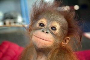 Cute-Monkeys-6
