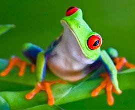 Fun_Facts_Main_Frog