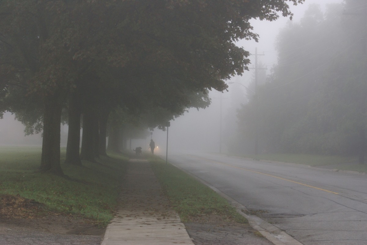 misty_morning_foggy_dog_canada_tree_early_morning-1414229